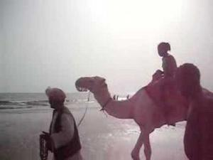 camel riding in massawa
